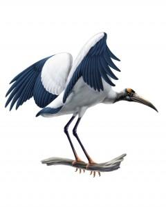 Wood_Stork